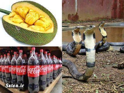 نوشابه کوکا کولا مضرات کوکا کولا سم مار کبری خواص دوریان حوادث واقعی Durian coca cloa Durian