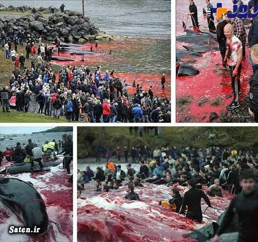مناطق توریستی دانمارک کشتار نهنگ ها زندگی در دانمارک جنایات اروپا جزایر فارو