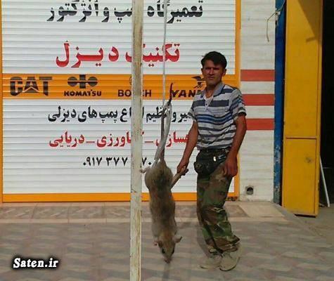 موش عظیم الجثه موش عجیب اخبار بوشهر