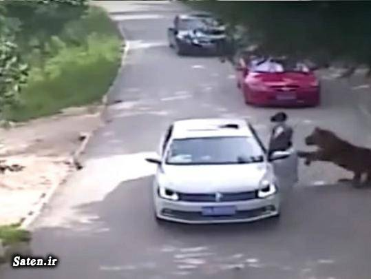 دعوا زن و شوهر حوادث واقعی اخبار چین