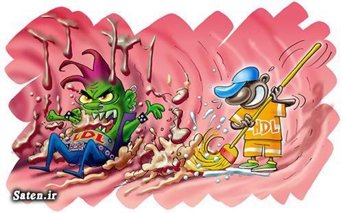 کاهش کلسترول خون کاهش چربی درمان کلسترول بالا درمان خانگی بهترین چربی سوز