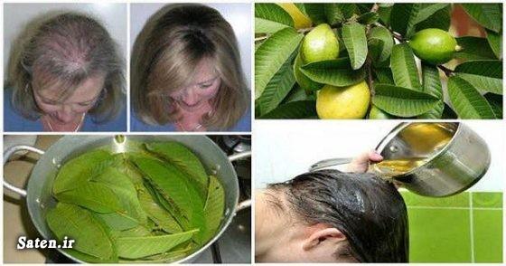 ویتامین ب کمپلکس قیمت میوه گواوا طب سنتی ریزش مو طب سنتی ریزش مو در زنان درمان ریزش مو درمان خانگی ریزش مو درمان خانگی دارو ریزش مو خواص گواوا پیشگیری از دیابت Guava
