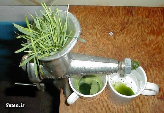 قشنگترین سبزه طرز تهیه آب سبزه گندم طب سنتی درمان خانگی درمان اگزما آموزش سبزه عید آب سبزه گندم