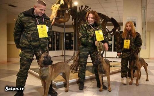 کلون سازی قیمت سگ بلژین مالینویز قیمت سگ سگ نگهبان بهترین نژاد سگ