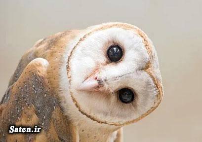 عکس های دیدنی عکس های جالب و زیبا عکس حیوانات عکس جغد