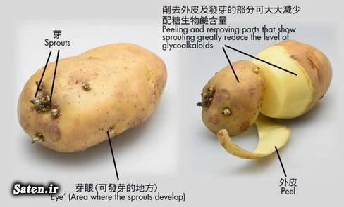 مجله پزشکی قیمت سیب زمینی فساد میوه ها حوادث واقعی GLYCOALKALOIDS
