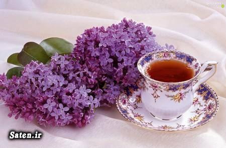 مجله سلامت متخصص طب سنتی علائم و درمان سرطان ریه طرز تهیه دمنوش دمنوش گل بنفشه خواص دم کرده گل بنفشه پیشگیری از سرطان بهترین دمنوش گیاهی انواع دمنوش ترکیبی