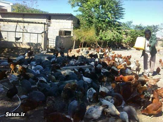 پرورشدهندگان مرغ گوشتی پرورشدهندگان مرغ تخم گذار پرورش مرغ تخمگذار در منزل پرورش مرغ بومی بهترین کسب و کار در روستا ایده های کسب درآمد ایجاد شغل در روستا آموزش کسب درآمد