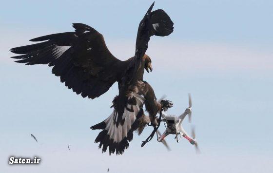 کوادکوپتر دوربین دار کوادکوپتر حرفه ای شکار پهپاد پهپادهای بلند پرواز پهپاد مدرن جاسوسی
