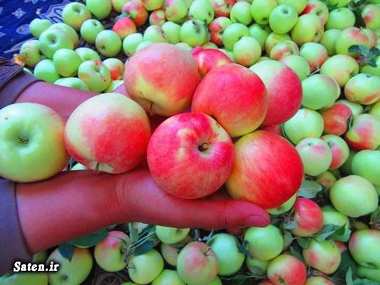 مضرات سیب مجله سلامت متخصص طب سنتی طرز تهیه دمنوش سیب گلاب سیب شمیرانی خواص سیب انواع سیب انواع دمنوش ترکیبی