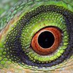 عکس های زیبا عکس های جالب و زیبا عکس حیرت انگیز چشمان زیبا چشم زیبا چشم خزندگان چشم حیوانات
