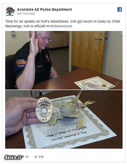 واقعیت زندگی در آمریکا عکس مارمولک پلیس آمریکا اخبار آمریکا