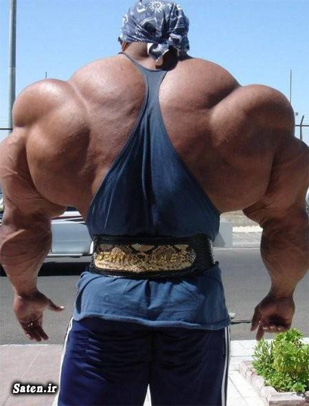 هورمون های استروئیدی هورمون بدنسازی قهرمان پرورش اندام پرورش اندام بهترین هورمون برای افزایش حجم عضلات بدنسازی