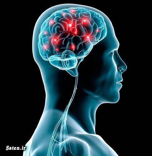 مجله سلامت سکته مغزی دانستنی های علمی دانستنی های جالب تستوسترون در زنان افزایش هورمون تستوسترون در مردان آیا میدانستید های پزشکی آیا میدانستید های باور نکردنی آیا میدانستید