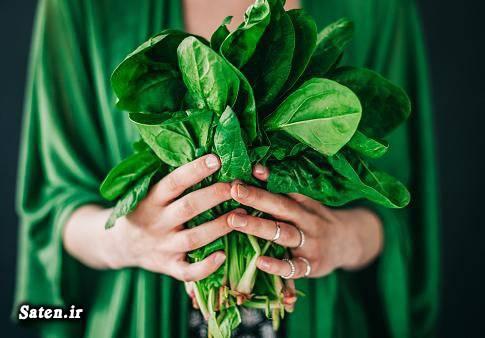 مضرات اسفناج مجله سلامت درمان آلزایمر خواص گیاهان جدیدترین داروی آلزایمر پیشگیری آلزایمر
