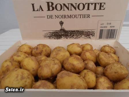 لاکچری گران قیمت ترین غذاهای جهان قیمت سیب زمینی شغل پر سود پرسودترین میوه پرسودترین محصول کشاورزی پردرآمدترین محصول کشاورزی بهترین محصول کشاورزی برای کاشت اخبار جدید کشاورزی La Bonnotte Potato