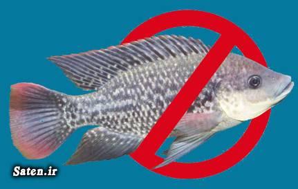 منابع امگا 6 مضرات ماهی تیلاپیا مضرات امگا 6 متخصص تغذیه ماهی تیلاپیا نخورید قیمت ماهی تیلاپیا قزل آلای رنگین کمان فواید ماهی تیلاپیا پیشگیری آلزایمر پرورش ماهی قزل آلا بیماری آلزایمر امگا 3
