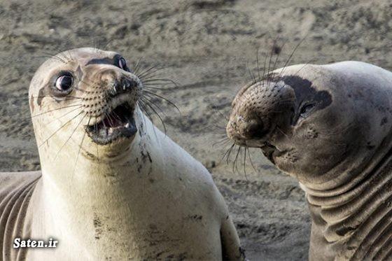عکس طنز عکس خنده دار عکس حیوانات عکاس حرفه ای حیوانات زیبا و دوست داشتنی حیات وحش بهترین عکاس
