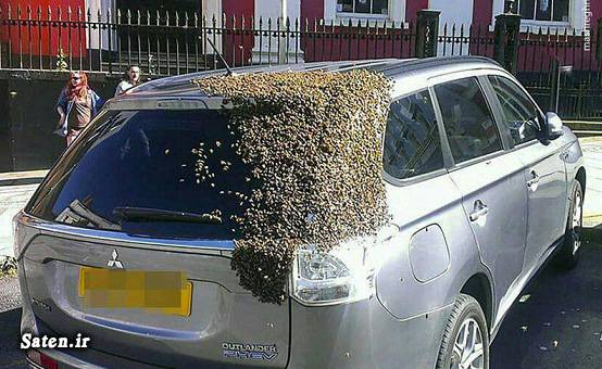 ملکه زنبور عسل زنبور عسل حیوانات عجیب دنیا پرورش زنبور عسل