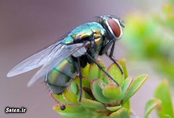 نکات خانه داری جالب گیاهان حشره کش گیاه ضد مگس راههای دفع مگس دفع مگس در خانه دانستنی های جالب حشره کش های طبیعی آموزش خانه داری