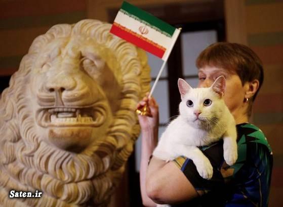 نتیجه بازی ایران و اسپانیا جام جهانی 2018 روسیه پیشگویی گربه روسی پیشگویی جام جهانی پیشگویی آینده ایران در جام جهانی 2018 اخبار جام جهانی 2018