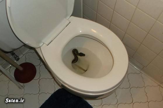 واقعیت زندگی در آمریکا مار پیتون عکس توالت توالت فرنگی اخبار آمریکا