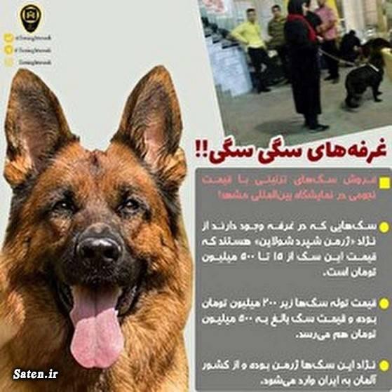 لاکچری بودن یعنی چی قیمت سگ فروش سگ سگ بازی پدر سگ ها بهترین نژاد سگ اخبار مشهد