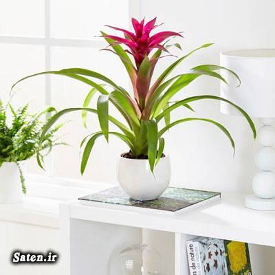 گیاهان آپارتمانی لوکس گیاهان آپارتمانی گیاه آپارتمانی آناناسی کاشت گیاه در گلدان کاشت گیاه بهترین گیاه خانگی بهترین گیاه برای نگهداری بهترین ترفندها