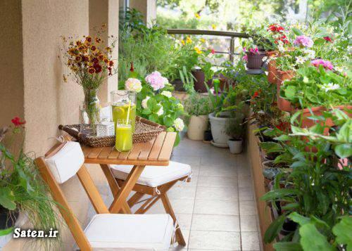 گیاهان آپارتمانی لوکس گیاهان آپارتمانی کاشت گیاه در گلدان کاشت گیاه دانستنی ها پرورش گل و گیاه بهترین گیاه خانگی بهترین گیاه برای نگهداری بهترین ترفندها