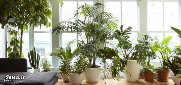 گیاهان آپارتمانی مقاوم گیاهان آپارتمانی سایه دوست گیاهان آپارتمانی کاشت گیاه در گلدان پرورش گل و گیاه بهترین گیاه برای نگهداری بهترین ترفندها