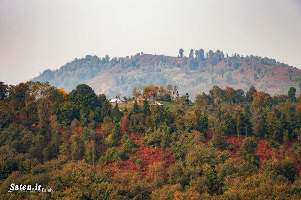 نام جنگل های ایران عکس جنگل های ایران عکس جنگل دیلمان کجاست جنگل دیلمان جاهای دیدنی شمال ایران جاهای دیدنی دیلمان اخبار دیلمان